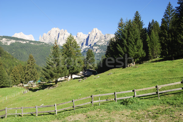 Alpine prairie arbre nature paysage arbres Photo stock © manfredxy