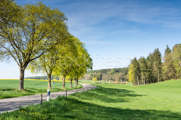 Fák vidéki út tájkép fű utca Stock fotó © manfredxy