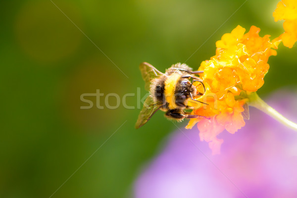 Néctar flor macro Foto stock © manfredxy