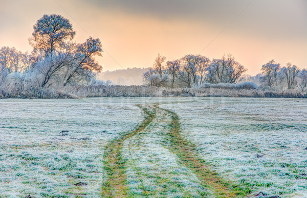 Winter scenic with forsted trees Stock photo © manfredxy