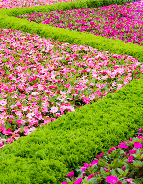 Floral pattern in a park Stock photo © manfredxy