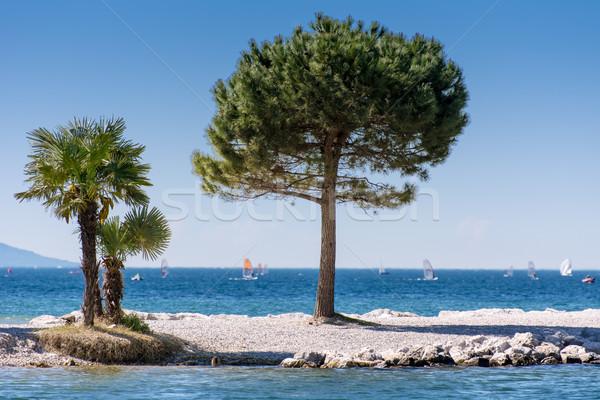 Trees at Lago di Garda Lakefront  Stock photo © manfredxy