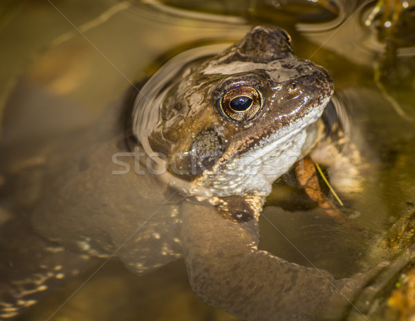 Toad Stock photo © manfredxy