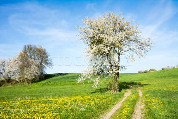 Landschap bloei boom voorjaar bloemen pad Stockfoto © manfredxy