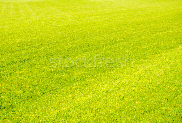 Perfect kort gesneden groen gras golf gazon Stockfoto © manfredxy