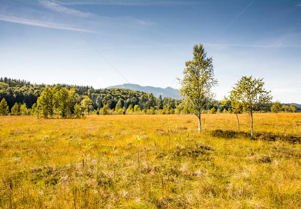 пейзаж озеро дерево Европа луговой Сток-фото © manfredxy