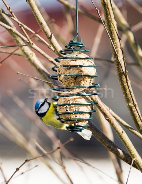 青 売り言葉 鳥 食べ 絞首刑 ツリー ストックフォト © manfredxy