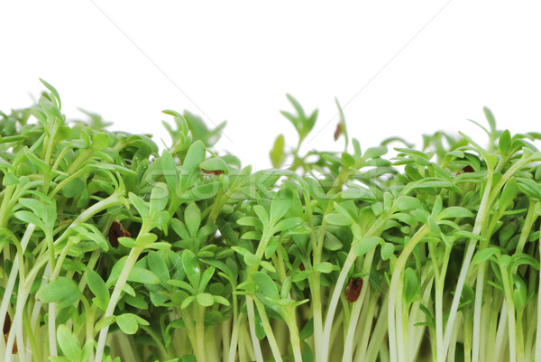 Isolated Watercress Sprouts Stock photo © manfredxy