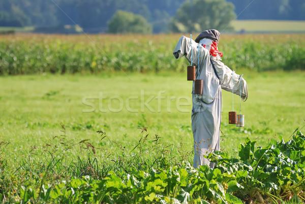 Vogelverschrikker veld groenten gras man tuin Stockfoto © manfredxy