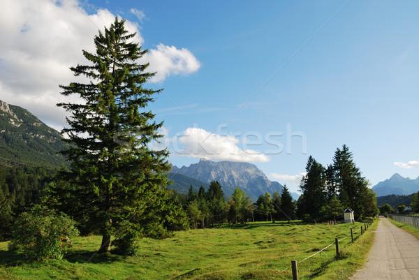 Alp pasture Stock photo © manfredxy