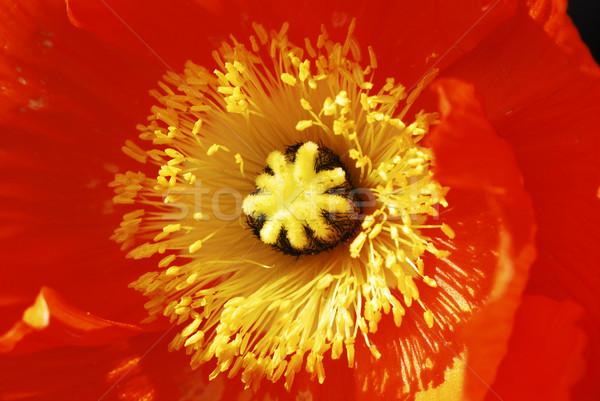 Flower Macro Stock photo © manfredxy