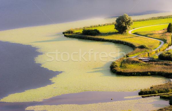 Swampland at lake Hopfensee Stock photo © manfredxy