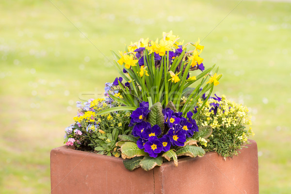 Rectangular flower pot in a park Stock photo © manfredxy