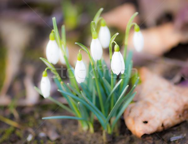 группа цветы весны природы макроса Сток-фото © manfredxy