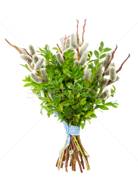 Pussy willow bunch for Palm Sunday Stock photo © manfredxy