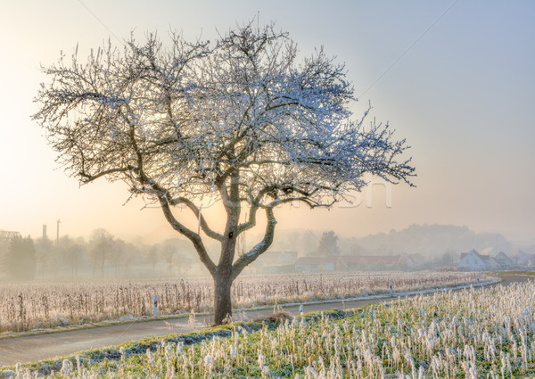 Lonely frosted tree in a foggy winter landscape Stock photo © manfredxy