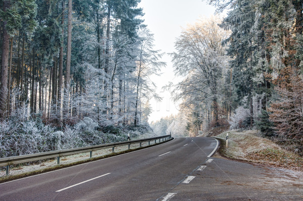 Road through a forest with frosted trees Stock photo © manfredxy