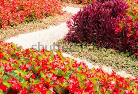 Járda virágágy virágágy tele piros virágok virágok Stock fotó © manfredxy