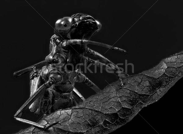 Empty skin of a dragonfly larva Stock photo © manfredxy