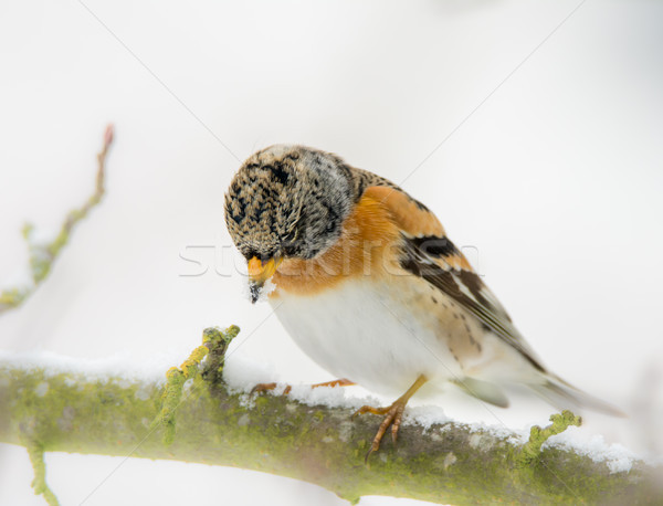 Vogel natuur tuin winter koud Stockfoto © manfredxy