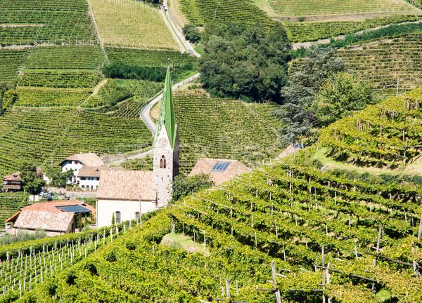 Vineayard at Bolzano Stock photo © manfredxy