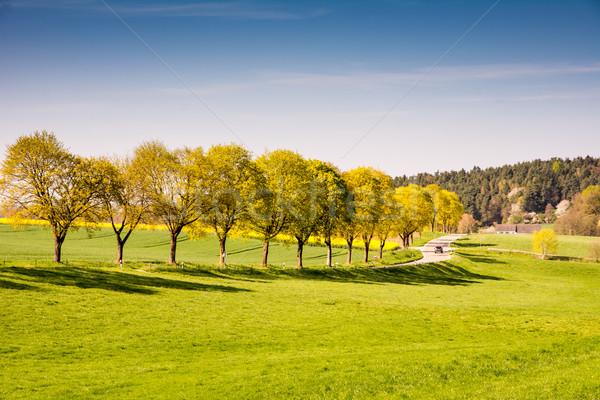 árvores estrada rural paisagem grama rua Foto stock © manfredxy