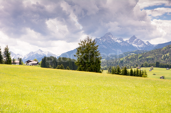 Pasture in the alps of Bavaria Stock photo © manfredxy