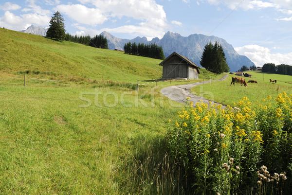 Idilli hegyek testtartás virágok fű tájkép Stock fotó © manfredxy