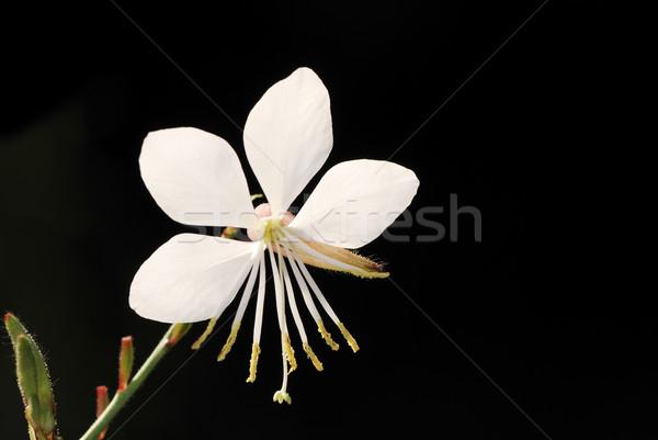 Foto stock: Flor · blanca · macro · flor · hoja · hojas · planta