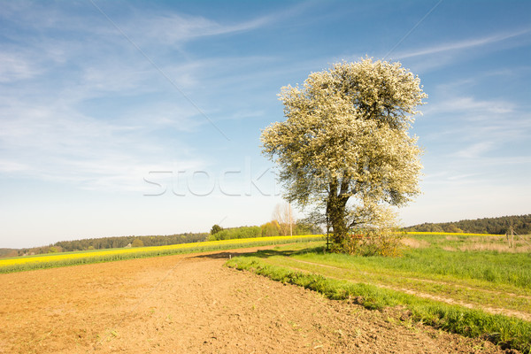 Manzara çiçekli ağaç bahar Stok fotoğraf © manfredxy