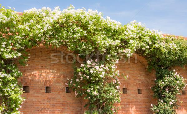 белый цветения закрывается кирпичная стена огромный саду Сток-фото © manfredxy