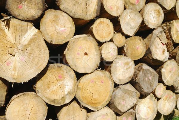 Firewood Stock photo © manfredxy