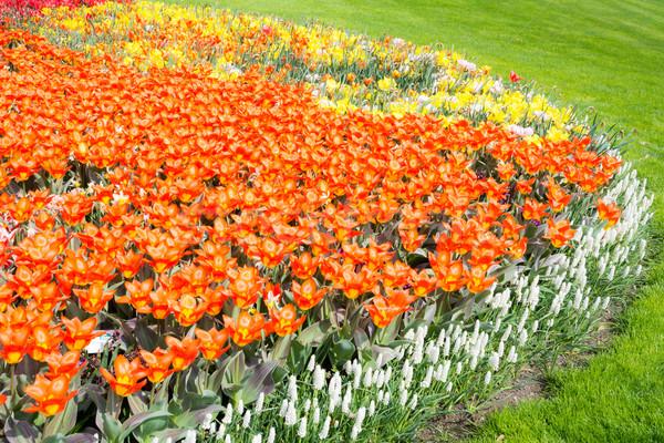 Floraison fleur de printemps lit orange floraison printemps Photo stock © manfredxy