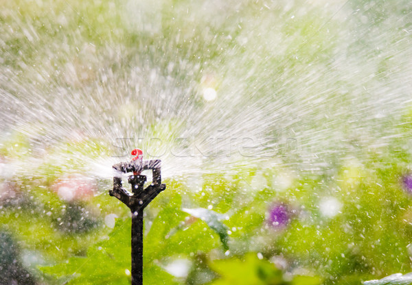 Garden irrigation with an automatic watering system Stock photo © manfredxy
