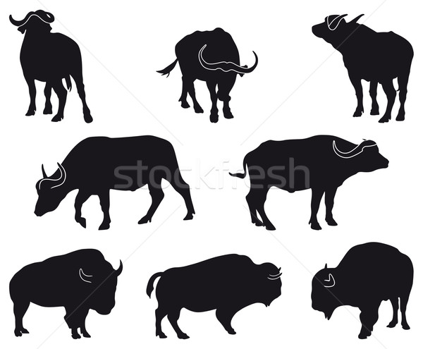 бизон афроамериканец восемь черный природы Сток-фото © mannaggia