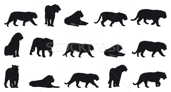 Tigre silhuetas quinze diferente natureza preto Foto stock © mannaggia