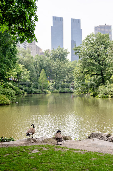 Central Park, Manhattan Stock photo © marco_rubino