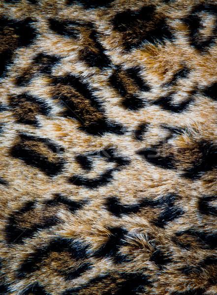 leopard skin texture Stock photo © Marcogovel
