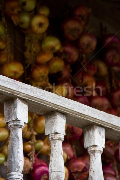 fence and onions Stock photo © Marcogovel