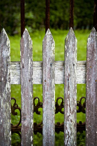 Cerca verde primavera grama madeira Foto stock © Marcogovel