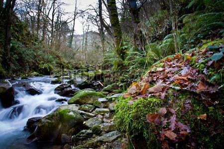 river forest Stock photo © Marcogovel