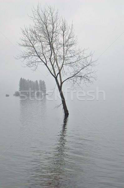 Winter Nachmittag Baum winterlich Wasser Stock foto © marcopolo9442