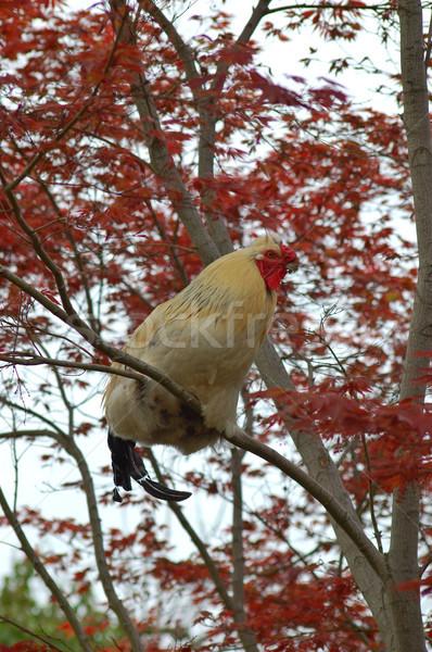 chicken Stock photo © marcopolo9442