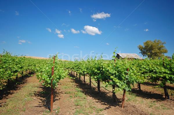 Vineyard Landscape Stock photo © marcopolo9442