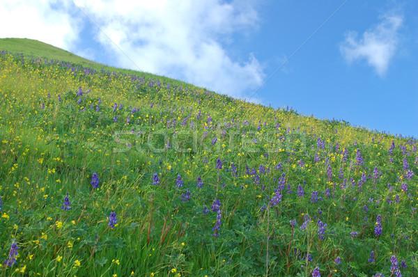 meadow in springtime Stock photo © marcopolo9442