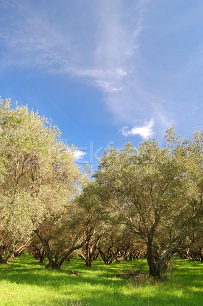 Boomgaard boom veld goud plant Stockfoto © marcopolo9442