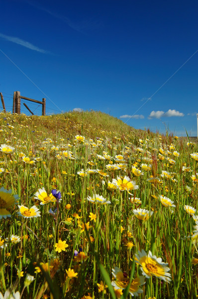 springtime meadow Stock photo © marcopolo9442