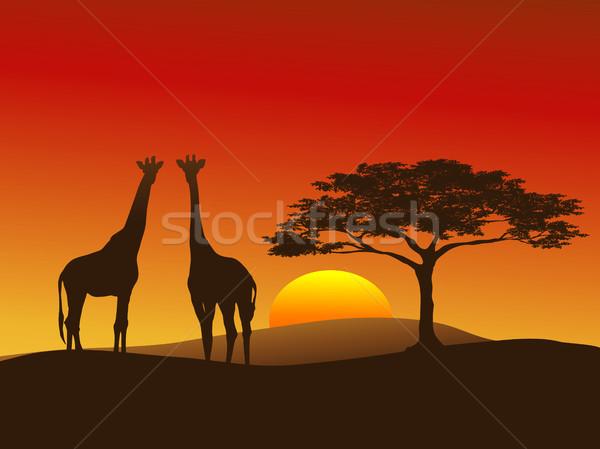Zsiráf sziluett zsiráfok Serengeti fa narancs Stock fotó © marcopolo9442
