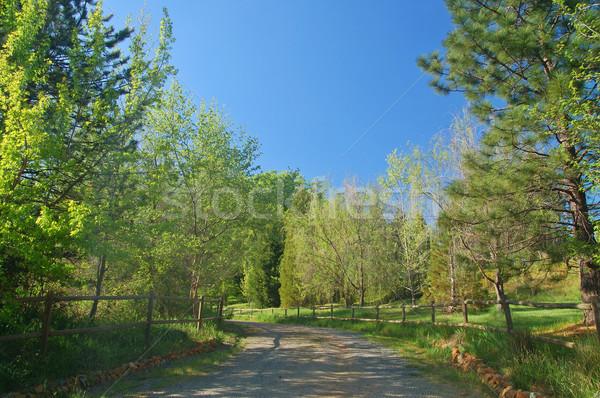 spring countryside Stock photo © marcopolo9442