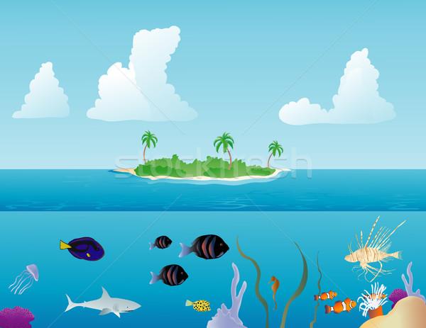 тропические рыбы различный плаванию вокруг Тропический остров воды Сток-фото © marcopolo9442